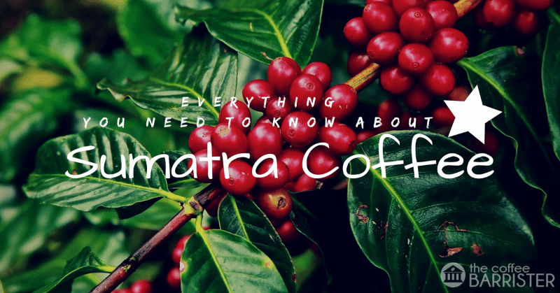 Everything You Need To Know About Sumatra Coffee